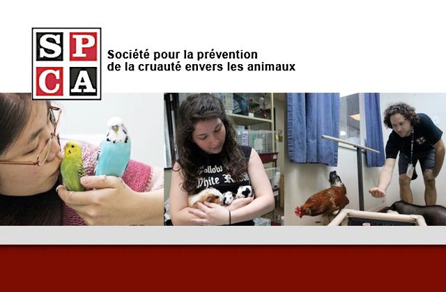 SPCA de Montréal