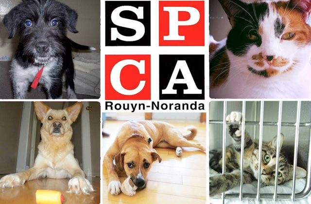 SPCA de Rouyn-Noranda