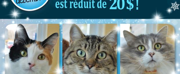 Visuel blitz adoption_déc. 2015